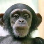 Выставка «Планета обезьян».